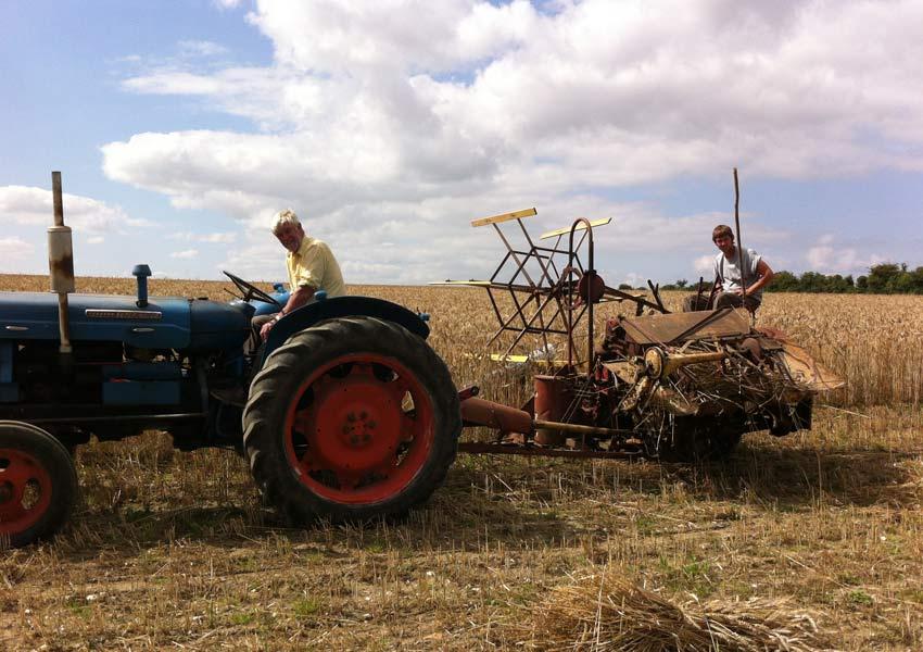 Harvesting thatching straw